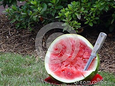 De Steekproeven van de watermeloen