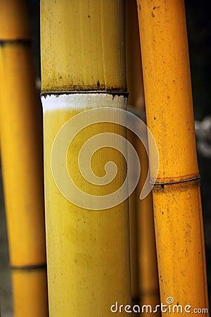 De steel van het bamboe