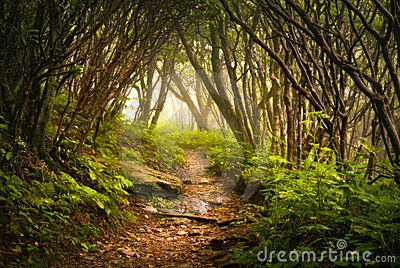 De steile Griezelige Mist van de Sleep van de Wandeling van Tuinen Appalachian