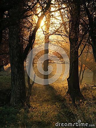 De stralen van de zon op een de herfstochtend