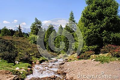 De stroom van de berg