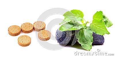 De tabletten van het basilicum