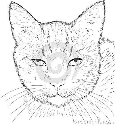 De tekening van de kat