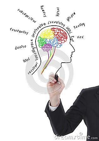 tekening hersenen