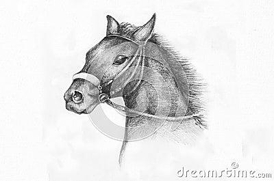 De tekening van het potlood van een paard stock foto 39 s for Disegni di cavalli a matita
