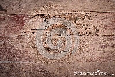 De termieten eten houten vloer