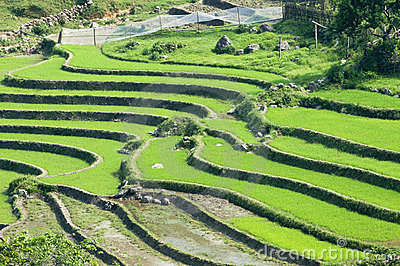 De terrassen van de padie in sapa vietnam royalty vrije stock afbeeldingen afbeelding 21486519 - Afbeeldingen van terrassen verwachten ...