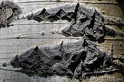 De textuur van de schors