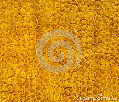 De textuur van het de slangleer van de close-up
