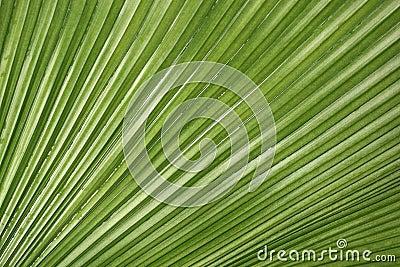 De Textuur van het palmblad
