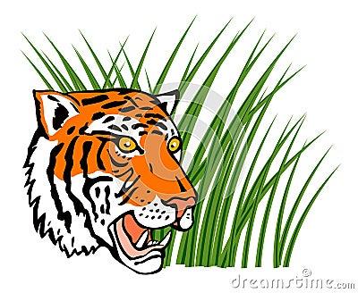 De tijger in het gras snuffelt rond