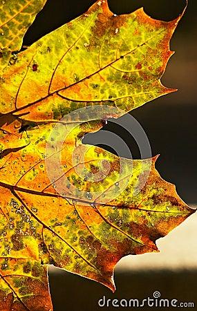 De transformaties van de herfst