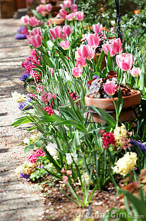 De Tuin van tulpen