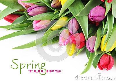 De tulpenbloemen van de lente