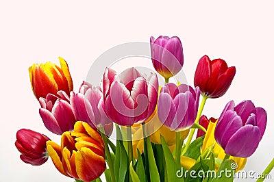 De tulpenboeket van de lente