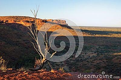 De typische Australische Scène van het Binnenland (de Canion van de Koning)