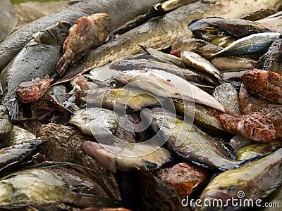De vangst