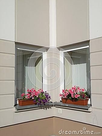 De vensters van bloemen