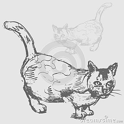 De vette Tekening van de Kat