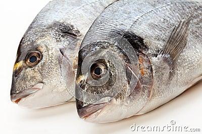 De vissen van Dorado