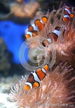 De vissen van Nemo