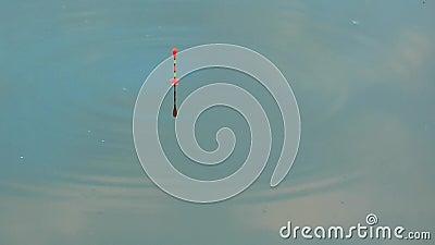 De visserij van vlotter die op de kalme oppervlakte van het water springen vissenbeet stock video