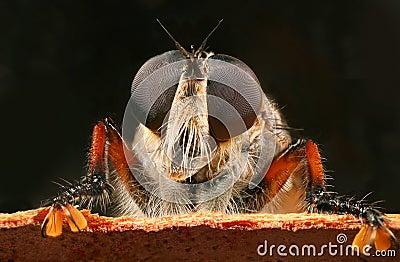 De vlieg van de rover