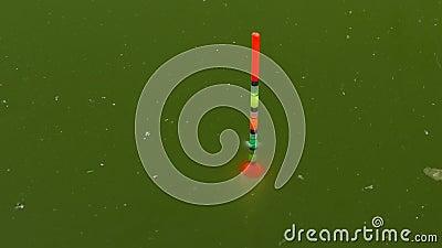 De vlotter voor de hengelbewegingen langzaam in het groene water stock video