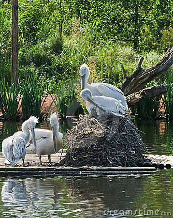 De Vogels van de pelikaan