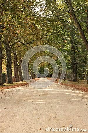 De weg van de herfst door een bos