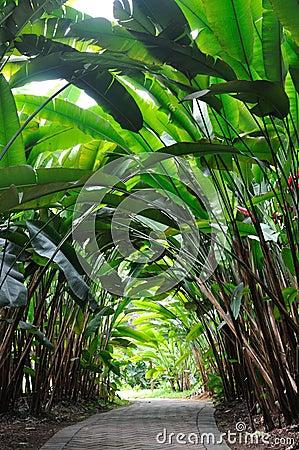 De weg van de tuin in hout Heliconia