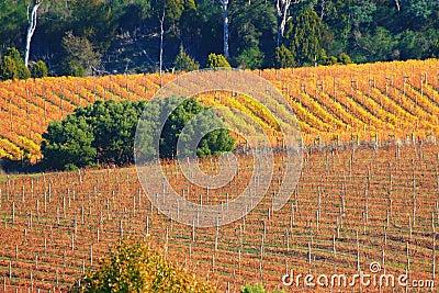 De Wijnstokken van de herfst