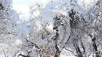 De winter Lanscape