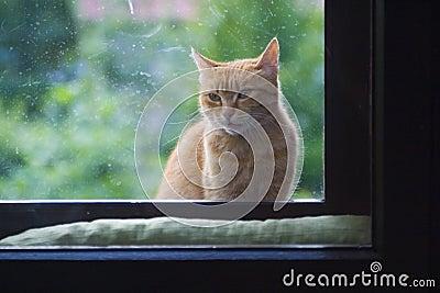 De zitting van de kat bij venster