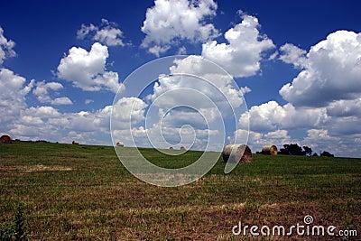 De zomer op het landbouwbedrijf