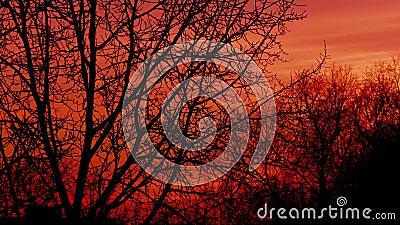 De zonsondergang over boom vertakt zich timelapse video stock footage