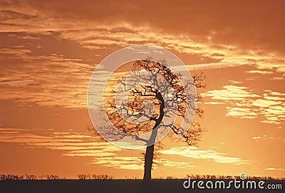 Met de gearticuleerde boomstammen van de aanhangwagen dragende boom