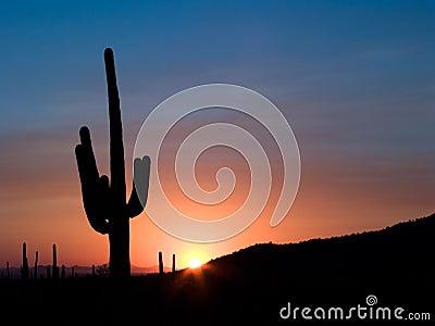 De Zonsondergang van Saguaro