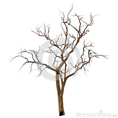 Free Dead And Dry Tree Royalty Free Stock Photo - 31646285