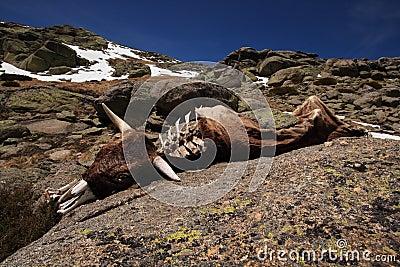 Dead animal carcass
