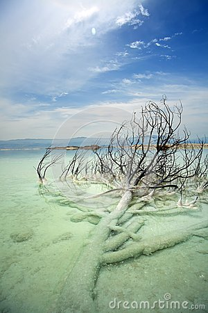 Dead Bush in Dead Sea