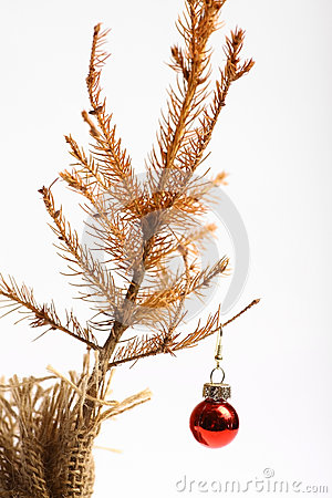 Free Dead Christmas Tree Stock Images - 39942584