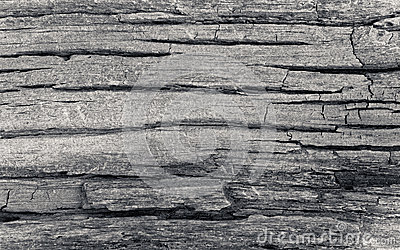 Dead cracked wood