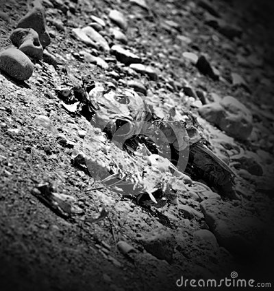 Dead Fish Drought Tom Green County Texas Editorial Stock Image