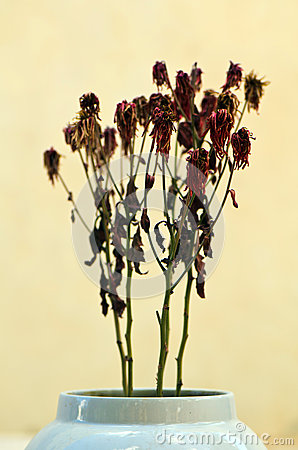 Dead flowers in vase