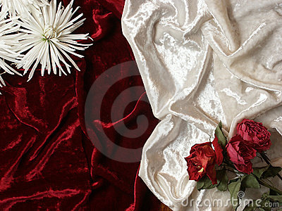 Dead flowers on velvet background