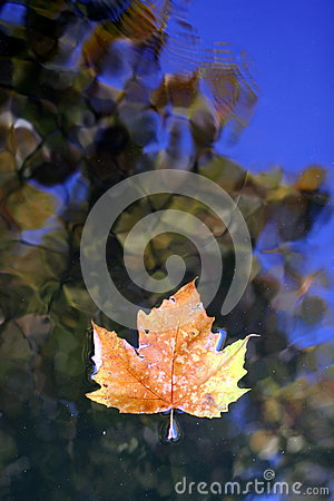 Free Dead Leaf On Water Surface Stock Images - 61955344