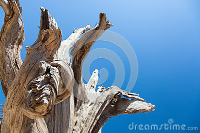 Dead Old Tree. Stock Photos - Image: 26849243