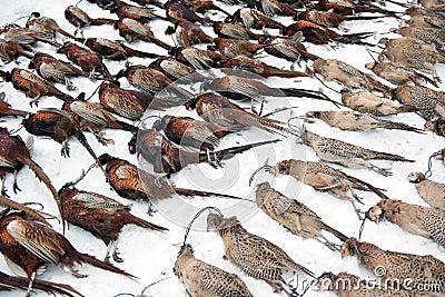 Dead Pheasants