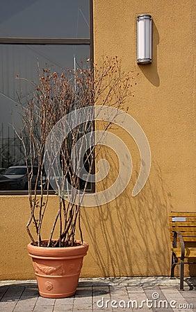 Dead plant in pot Stock Photo